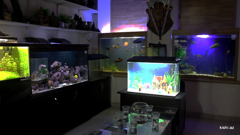 Akvariumunuzu özünüz daizayn edin foto